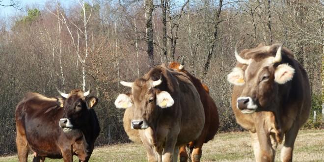 Mise en place d'un projet alimentaire territorial